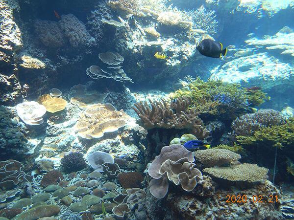 サンゴと熱帯