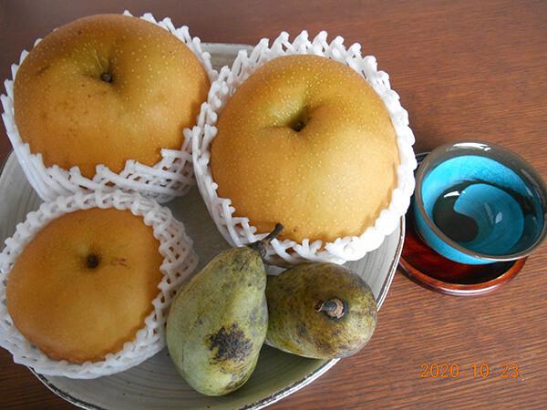 「にっこり」という品種の梨と4Lの梨「豊水」とポポーの実の大きさ比べ