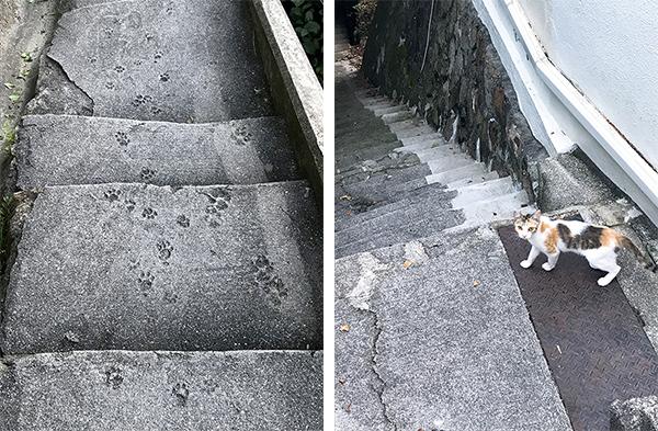 写真・コンクリートに残された猫の足跡)(25-2写真・わざわざ近づいてきた猫