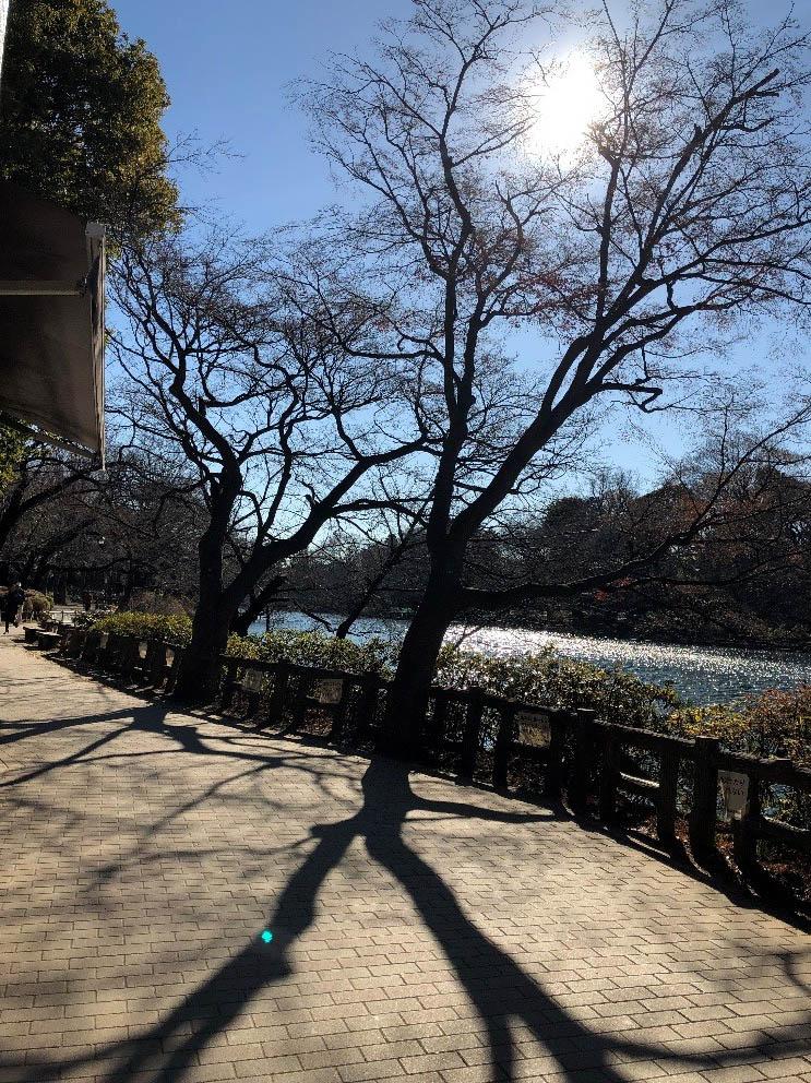 井の頭公園の遊歩道。いい天気で気持ちいい!