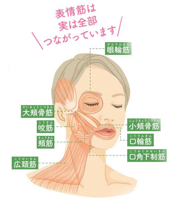 顔のたるみの原因は表情筋が衰えて薄くなること