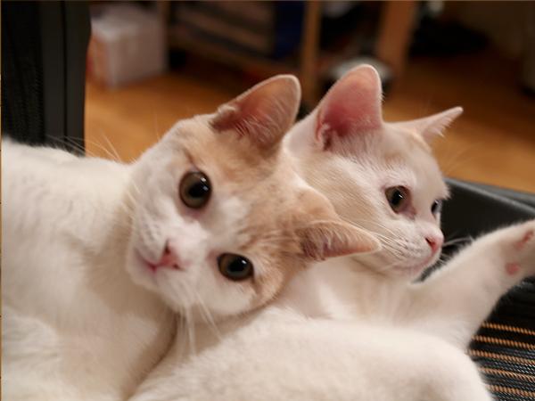 保護猫兄弟・日々ねこたま5