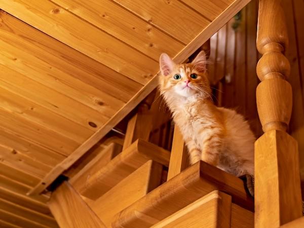 どうして猫は高い所からジャンプしても大丈夫なの?