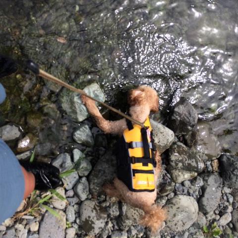 川で遊ぶモカ