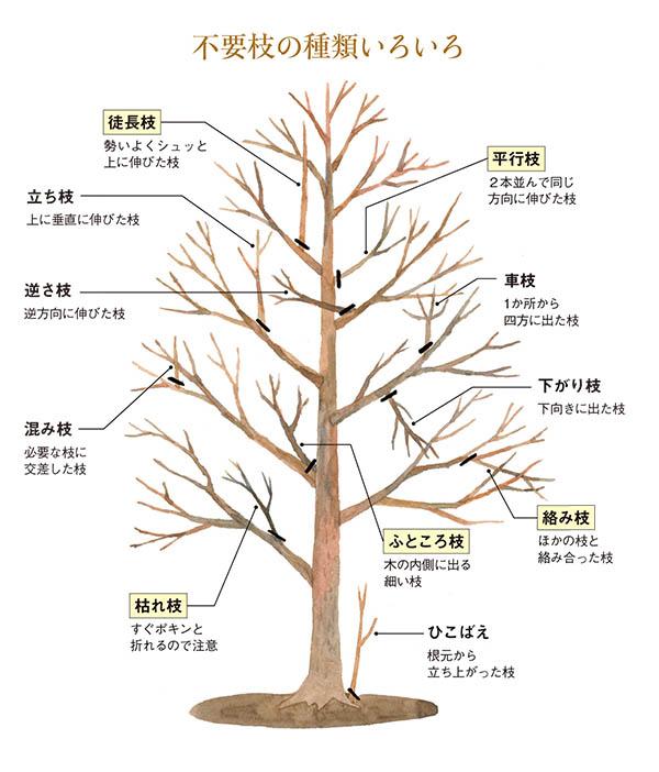 この11種類を暗記するのはなかなかに至難の業。そんな方は「『枯れ枝、徒長枝、絡み枝、ふところ枝、並行枝』の5種を整えるだけでも十分美しい樹形になります」(塚本さん)。