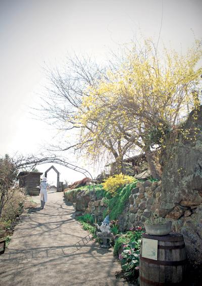 4月初旬はレンギョウや水仙などが見頃。鳥海山の噴火石からレンギョウの木が生えています。