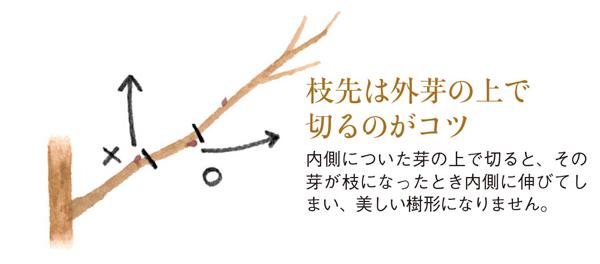 剪定した枝は、捨てずに花壇の支柱に使っています。枝だと、プラスチックなど人工的な素材の支柱より、自然の景色に溶け込んでくれるのだそう。さすがのアイデアです。