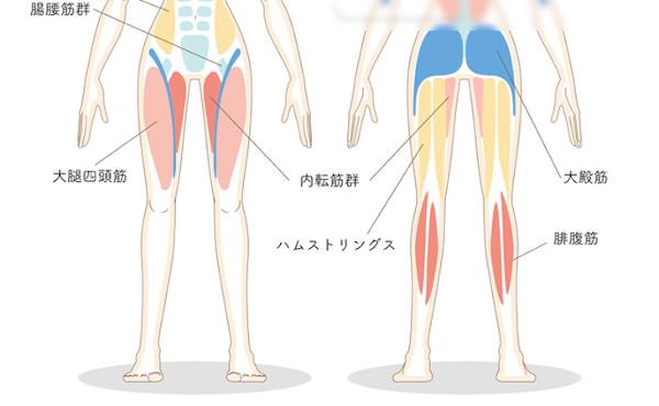 ハムストリングス・腸腰筋・大腿四頭筋