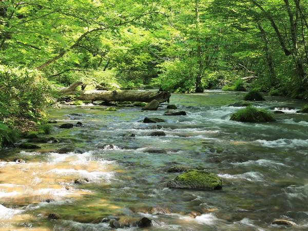 日本で一番きれいな川はどこ?