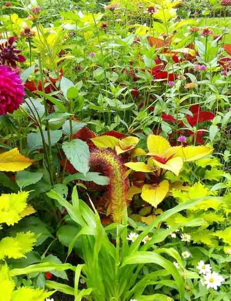 ラカスタ ボーダーガーデンの花