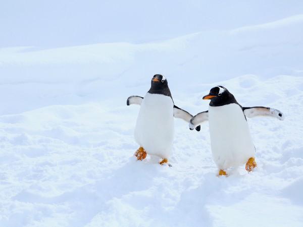 飛べない鳥ってペンギンだけ?他にもいるの?