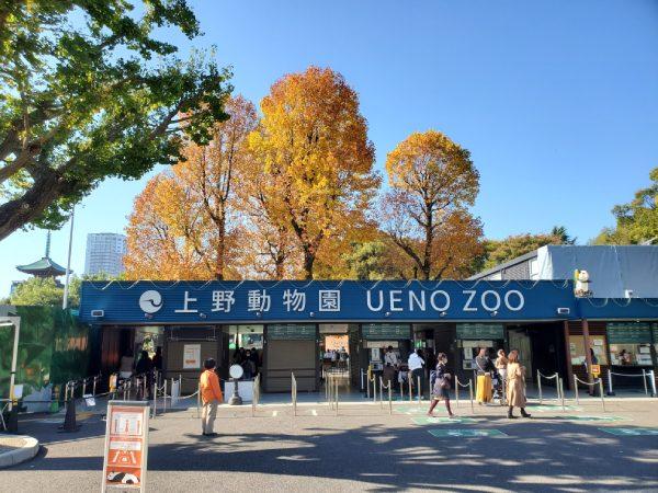 上野動物園、再び閉園…シャンシャンに会えない