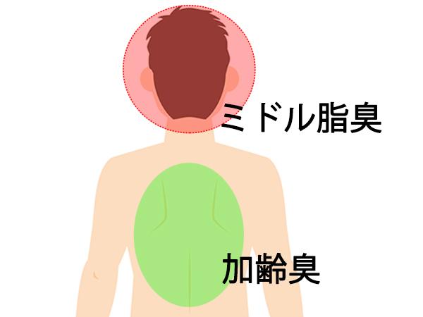 加齢臭とミドル脂臭の発生する場所