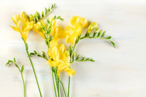 日持ちをする切り花の種類とは?