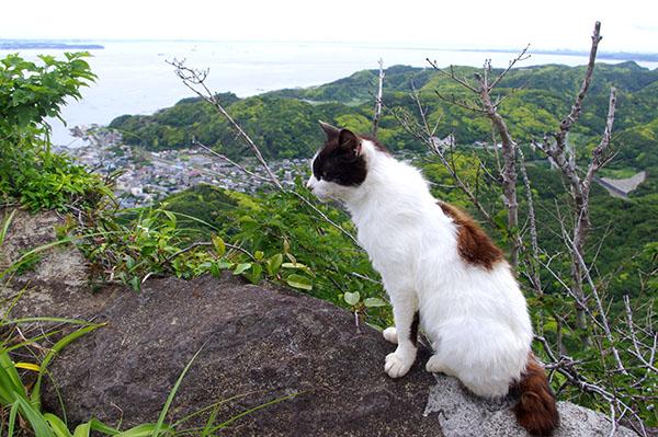 山頂にいた凛々しい猫