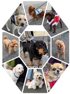 コロナ禍の中で出会う可愛い犬たち