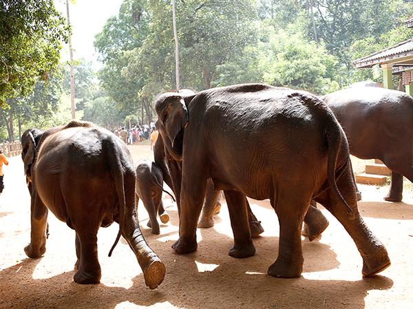 国立公園では野生の象が見られるサファリがある