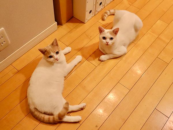 保護猫兄弟!日々ねこたま5