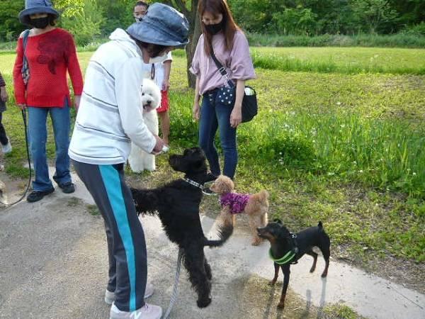 コミュニケーション不足を解消してくれる愛犬の散歩