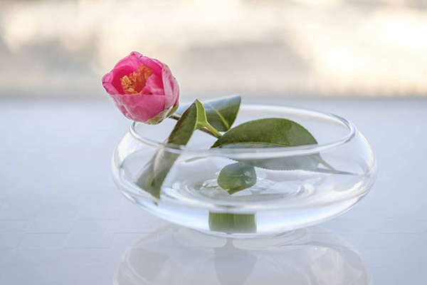 キャンドゥの浅い器は、花を水に浮かべるように飾る