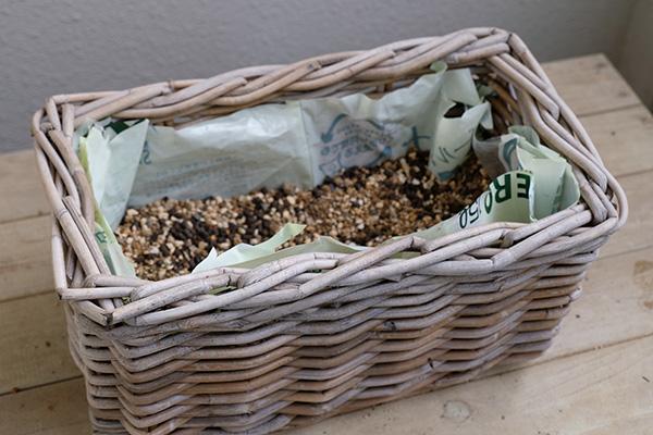 パンジー、ビオラを使った寄せ植えの作り方