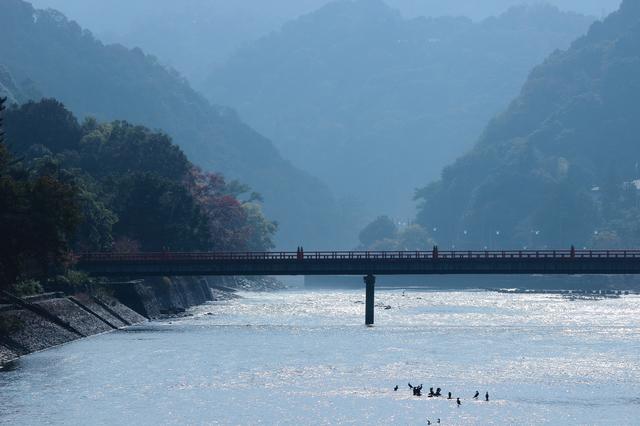 京都府宇治市 宇治川の風景