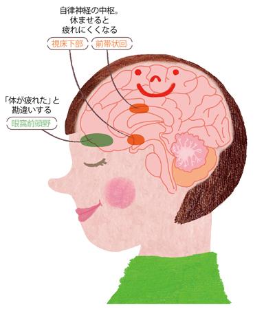 普段感じている疲れの原因は、脳疲労
